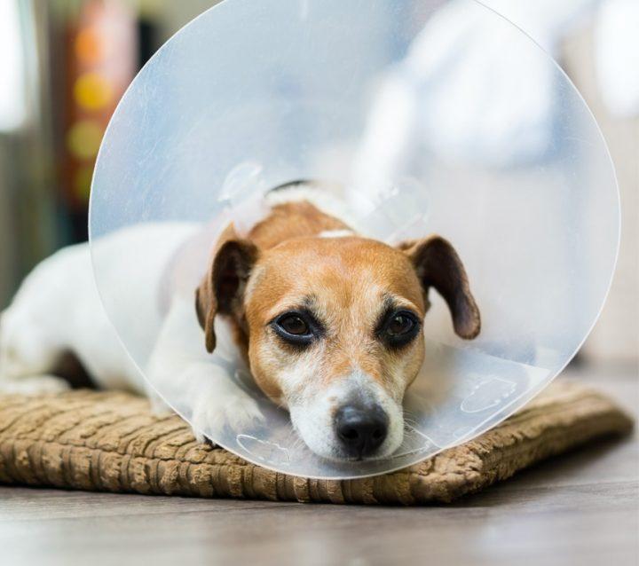 Dog Vet Clinic Volunteer