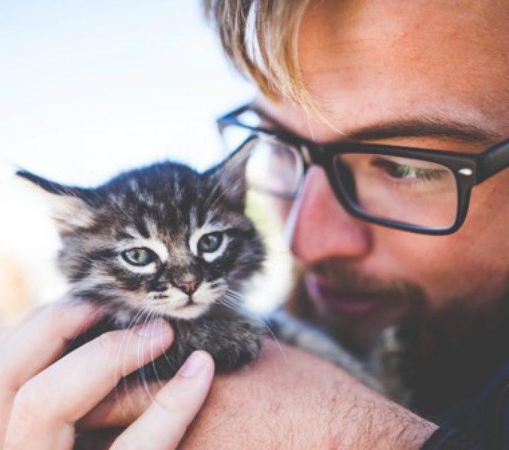 a little kitty